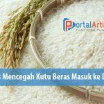 Agar beras tidak berkutu